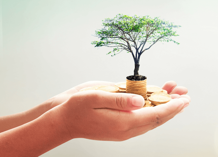 Hand holding small tree representing a hedge fund