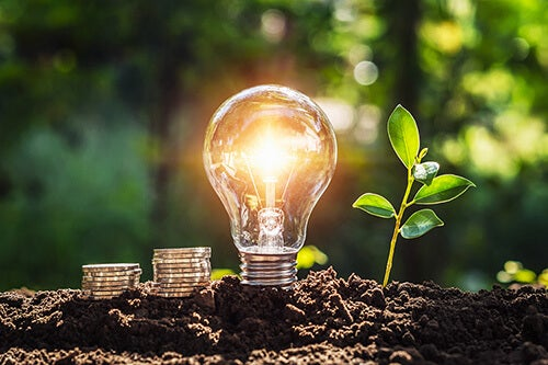 Lightbulb next to growing plant and coins